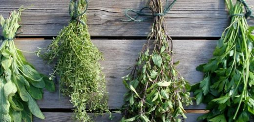 Fertilité : Les plantes qui peuvent aider à tomber enceinte