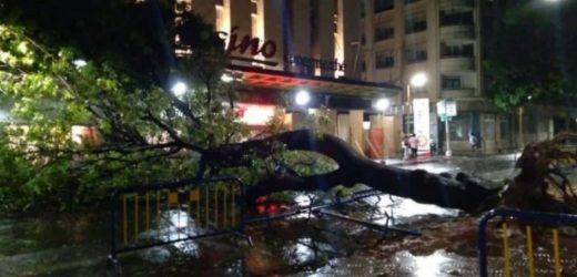 Pluie Et Vent Fort À Dakar : Un Arbre Déraciné Au Centre-Ville